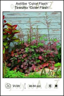 Astilbe-Color-Flash.jpg