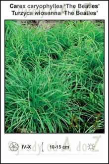 Carex-caryophyllea-The-Beatles.jpg