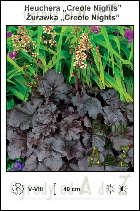Heuchera-Creole-Nights.jpg