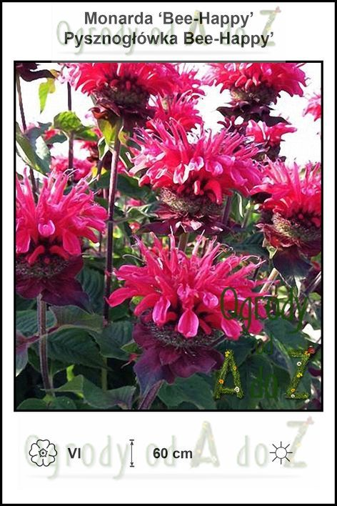 Monarda-Bee-Happy.jpg